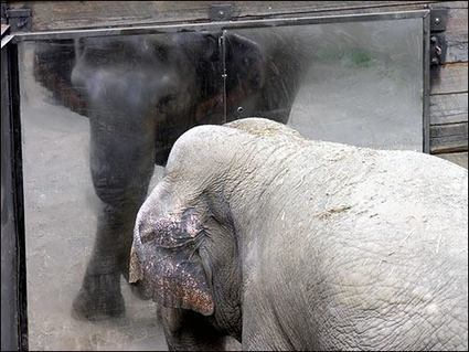 These Were the 10 Worst Zoos for Elephants in 2015 | Care2 Causes | Animals R Us | Scoop.it