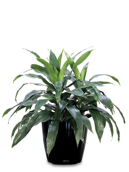 Make Your Space Hygienic and Sterile With Indoor Plants Melbourne | Inscape Indoor Plant Hire | Scoop.it