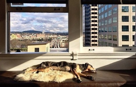 Do Pets Make the Best Co-Workers? | Slideshow | Digital-News on Scoop.it today | Scoop.it