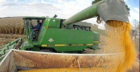 Argentina: Se cosechó mas del 70% del maiz | Maíz | Scoop.it