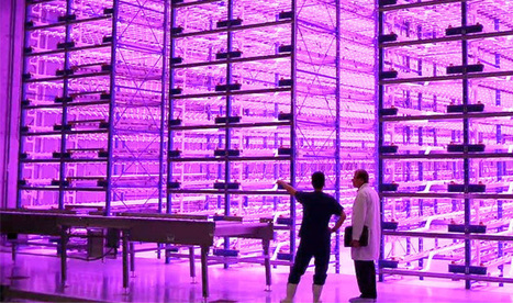 From Greenhouses to Pinkhouses Using LED Lighting | Creative lighting | Scoop.it