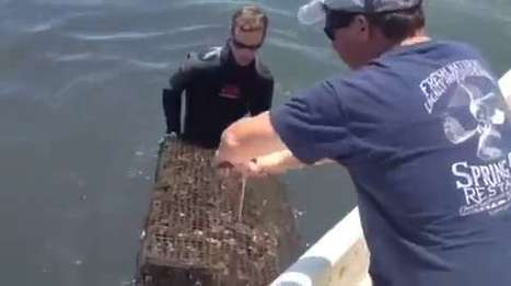 Fishermen become farmers in quest for a new oyster industry | Aquaculture | Scoop.it