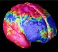 Brain Scans are Revealing the Neuro-Anatomy of Intelligence   Brain Science and education   Scoop.it
