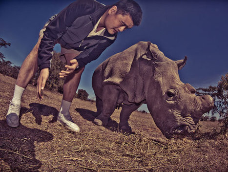 Yao Ming visits Kenya to film anti-poaching documentary aimed at protecting ... - Yahoo! Sports (blog) | Save our Rhino and all animals...this is what it looks like!!!!! | Scoop.it