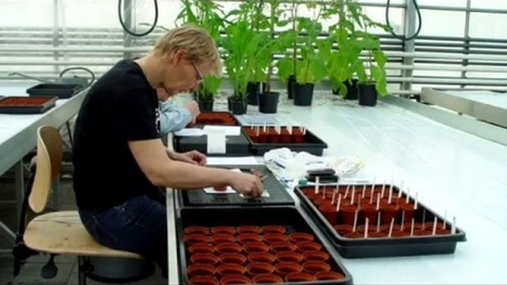 Can we safely eat plants grown on Mars? Wieger Wamelink crowdfunding research Wageningen | MARS, the red planet | Scoop.it