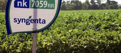 Syngenta Cultivates a Better Bid | Grain du Coteau : News ( corn maize ethanol DDG soybean soymeal wheat livestock beef pigs canadian dollar) | Scoop.it