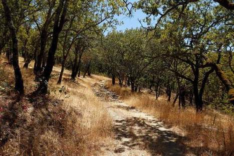 Sonoma Developmental Center property named for county open space protection   Healdsburg, California Lifestyle   Scoop.it