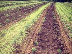 For healthy food we need living, organic soils | Un potager dans la ville | Scoop.it