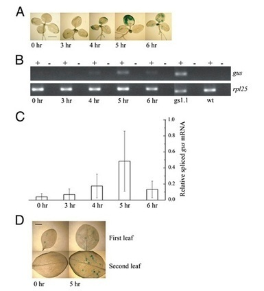 Gene Transfer from Organelles to Nuclei Visualized   Plant Genomics   Scoop.it