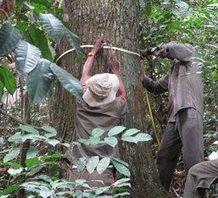 News Press | Bilan carbone : l'arbre ne cache plus la forêt | L'actualité de l'Université de Liège (ULg) | Scoop.it
