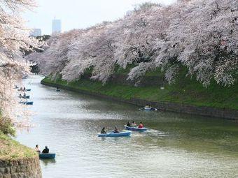 【ピンク色に染まる】台湾( ^∀^)「日本の桜が見たい!」日本行き空の便がほぼ満席!!! (´∀`)ノ 歡迎光臨 保守速報   Taiwan Hacks   Scoop.it