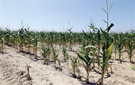 Ag producers still fighting Mother Nature - Leader and Times | The Barley Mow | Scoop.it