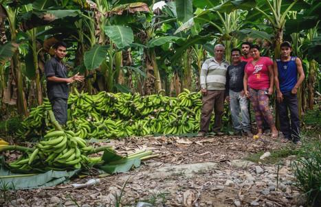 «Dans notre combat, nous ne ferons de cadeau à personne».  Chronique paysanne au bord du fleuve Chama | Venezuela | Scoop.it