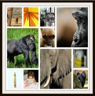 Free Technology for Teachers: Make PicMonkey Collages to Pique Kids' Interest in Books | Embedding digital literacy in the classroom | Scoop.it
