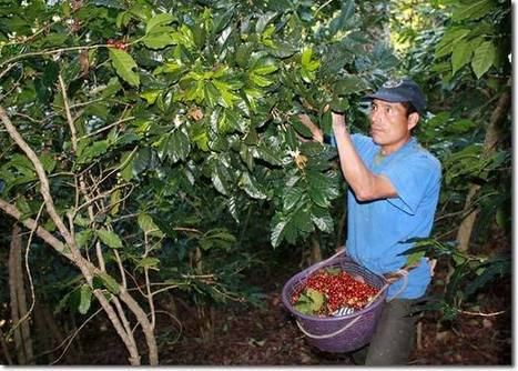 The Role of Trees in Agroecology and Sustainable Agriculture in the Tropics | Sustainable Futures | Scoop.it