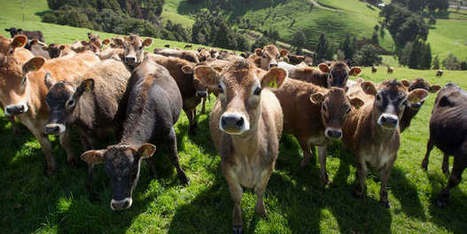 Impact of dairy farming a key election issue | Waibury Agricultural Farm Investments | Scoop.it