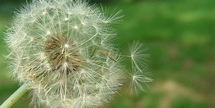 El Zinc para el tratamiento de Alergias | Centro Terapeutico ... | Medicina Natural | Scoop.it