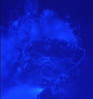 NOAA Ocean Explorer | archea | Scoop.it