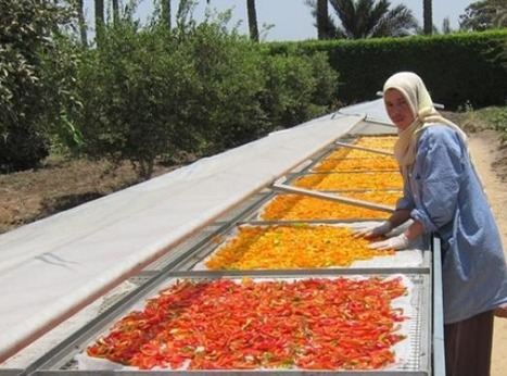 Dried produce seller utilizes solar technology to create a healthy snacking alternative | Égypt-actus | Scoop.it