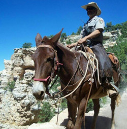 New Grand Canyon Mule Rides Offer Breathtaking East Rim Views | Grand Canyon Things to Do | Scoop.it