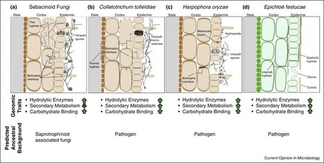 Dissecting endophytic lifestyle along the parasitism/mutualism continuum in Arabidopsis | Host microbe interactions | Scoop.it