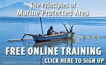 Coral Triangle Center   Ensuring coral reefs for life   Marine Protected Area   Scoop.it
