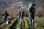 Food safety act sows anger with small farmers | Food issues | Scoop.it