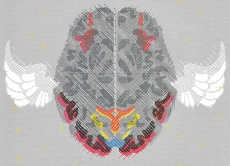 Brain imaging: fMRI 2.0-Functional magnetic resonance imaging | Organ Donation & Transplant Matters Resources | Scoop.it