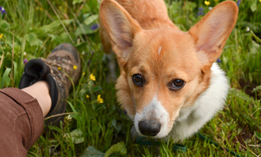 5 Incredible Things Dogs Sense About You | Care2 Healthy Living | Caring About Pets | Scoop.it