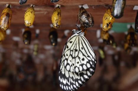 Les papillons en liberté mis à nu | EntomoNews | Scoop.it