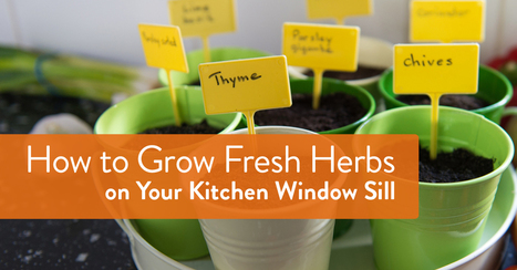 Plant a Garden on Your Window Sill | Gardening with Kids | Scoop.it