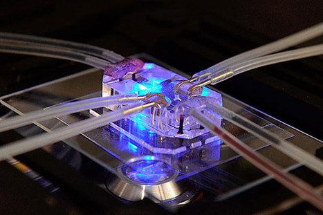 Simulador de órganos para reducir los ensayos con animales   Gestión y competencias profesionales   Scoop.it