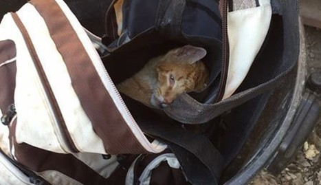 Injured Cat Was Thrown Out Like Trash In A Backpack | Nature Animals humankind | Scoop.it