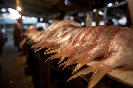 More Than 20% of Imported Wild Caught Seafood Entering the US is Illegal, New Article Estimates | Blue Planet | Scoop.it