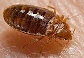 Northeastern Exterminating | How to treat bed bugs in brooklyn | Scoop.it