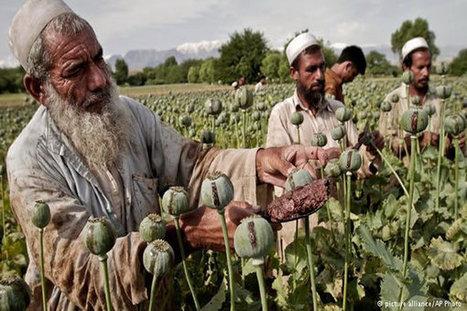 Afghanistan's Drugs Problem - Share on Meebal.com   Worldwide News   Scoop.it