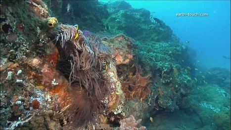 Coral Reefs & Climate Change | Coral Reefs | Scoop.it