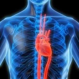 Statins side-effects on cardio organ | Health | Scoop.it