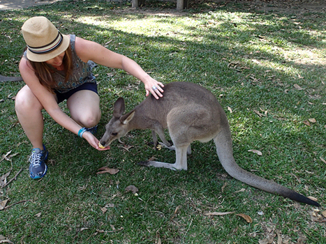 Australia: Animal Lover's Paradise | The Social Revolution | Scoop.it