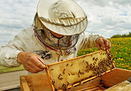 Small-Scale Beekeeping | Sustain Our Earth | Scoop.it
