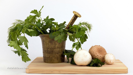 Antiviral herbs, vitamins, and minerals | Health News | Scoop.it