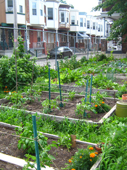 City Bountiful: The Rise of Urban Agriculture | green streets | Scoop.it