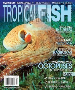 Tropical Fish Hobbyist - March 2014 | eMagazines Direct Download | Scoop.it