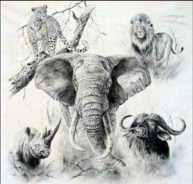 Dessin Afrique: beautés de la Faune Africaine en noir et blanc | Actions Panafricaines | Scoop.it