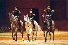 Chevalmag - Les chevaux ne connaissent pas le trac   Equitation éthologique   Scoop.it