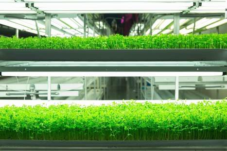 FarmedHere has high ambitions with new 60,000 sq ft vertical farm | Vertical Farm - Food Factory | Scoop.it