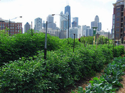 The Rise of Urban Farming and Other Varieties of Sustainable Ag | Vertical Farm - Food Factory | Scoop.it