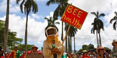 On Kauai, Marathon GMO Hearing Ends With Strict Rules For Biotech - Huffington Post | GE Salmon not worth the risk | Scoop.it