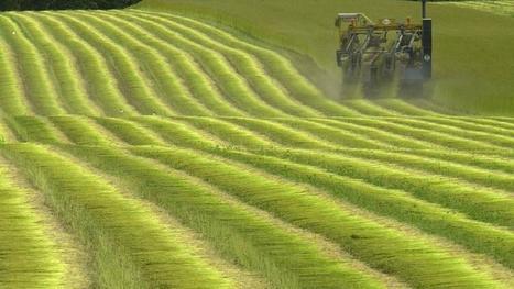 Crise agricole : «On devrait encourager les petits producteurs et boycotter les supermarchés» - Le Figaro | Le Fil @gricole | Scoop.it