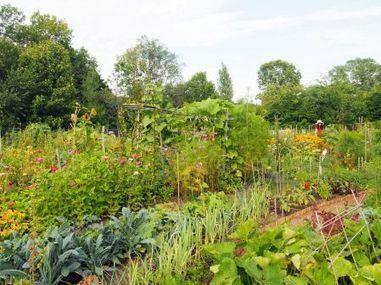 Un tour du monde de l'agriculture urbaine | Agriculture urbaine et rooftop | Scoop.it